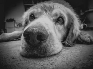 Saying Goodbye: 8 Ways to Prepare and Cope with Pet Loss  - Dr Vanessa